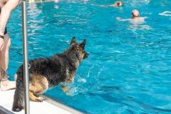 Hundebadetag2021-108