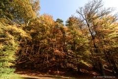 Herbst08