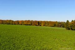 Herbst17