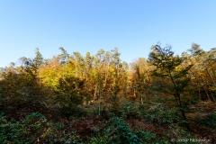Herbst22