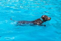 Hundebadetag2021-102