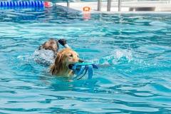 Hundebadetag2021-112