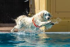 Hundebadetag2021-126